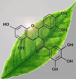 Sustancias Activas del Te Verde